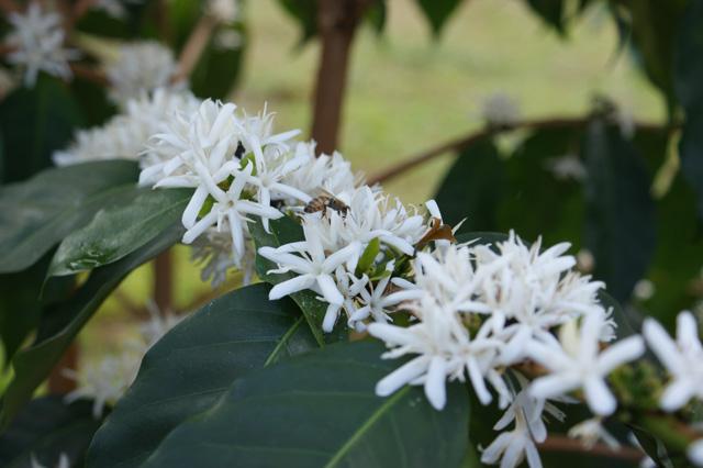 Flowers-Bee_640x426